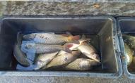 19 порушень Правил рибальства – результати рибоохоронної роботи за тиждень на Волині