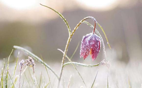 На Волині прогнозують заморозки та сильний вітер