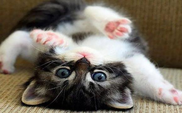 Українець займався контрабандою кошенят і попався