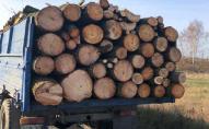 На Волині викрили схему розкрадання лісу