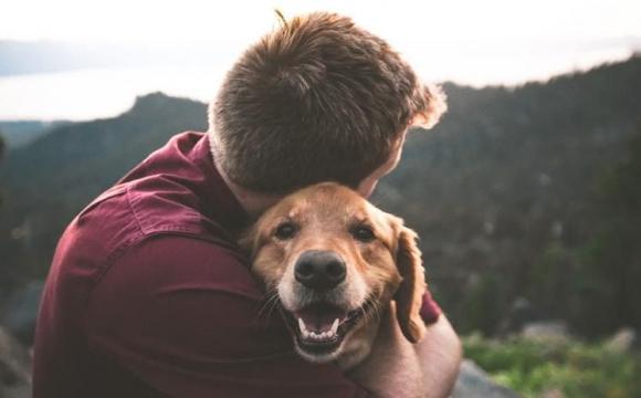 Найкращі ліки від стресу - собаки