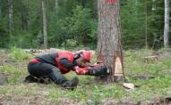 На Волині біля дороги ріжуть дерева: попереджають про ускладнений рух