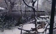 Одеську область засипало снігом