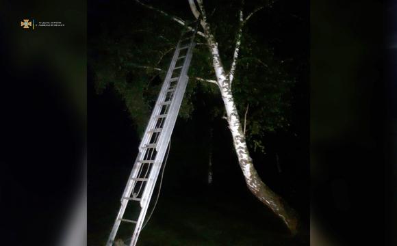 На Львівщині 8-річний хлопчик застряг на дереві: як його рятували