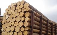 На волинському кордоні намагались контрабандою вивезти деревину