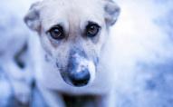 Не люди, а звірі: з балкона викинули собаку
