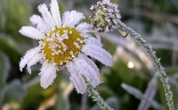 На Волині прогнозують мокрий сніг, а на Вербну неділю - заморозки