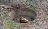 На Київщині кінь впав у колодязь. ФОТО