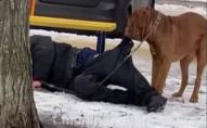 Собака за штани тягнув п'яного господаря додому. ФОТО