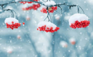 Прийде похолодання: прогноз погоди на 30 грудня
