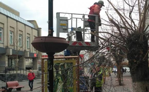 На вулиці Лесі Українки в Луцьку кронували дерева. ВІДЕО