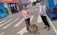 Корм замість морозива: у Луцьку дві школярки годують безпритульного пса