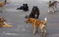 На ЛПЗ бродячі собаки кусають людей