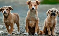 Чому у Луцьку збільшується кількість безпритульних тварин