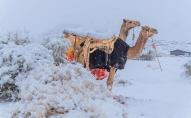 Сахару засипало снігом. ФОТО