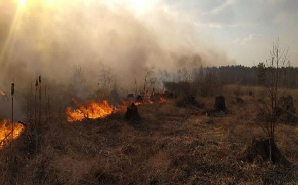 В Україні заборонили випалювати траву, але штрафувати не будуть?