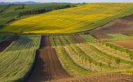 У підприємства на Волині забрали більш як 82 га землі