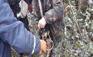 На Волині собака впав в криницю: викликали МНС. ФОТО