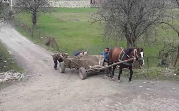 На Волині чоловік посеред білого дня вкрав коня з возом