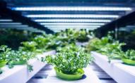 Біля Копенгагена відкрилася найбільша в Європі вертикальна ферма
