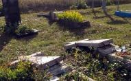 Два підлітки на кладовищі влаштували погром, розтрощили декілька десятків могильних плит