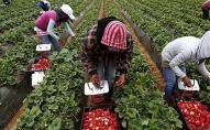 Українським заробітчанам підвищили зарплату: перелік країн та вакансій