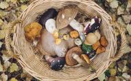 Посеред зими волинянка назбирала чимало грибів. ФОТО