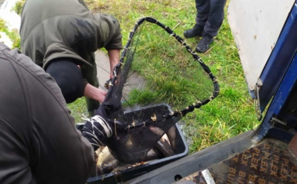 У Волинське водосховище запустили 2 тонни риби. ФОТО