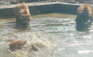 У Луцькому зоопарку прокинулись ведмеді