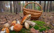 На Волині семеро людей отруїлося грибами