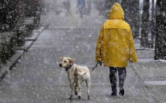 Весняна негода: Україні прогнозують мокрий сніг, дощ і туман