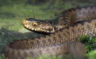 9-річний хлопчик, якого вкусила змія - у реанімації