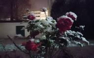 Перший сніг у Луцьку: атмосферні фото