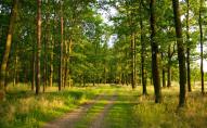 На Волині 74 гектари земель лісового фонду хочуть повернути державі